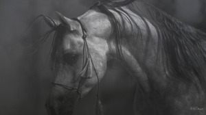horse-in-black-white-11-18593