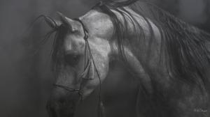 horse-in-black-white-11-18593