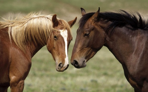 wild_horses-1280x800